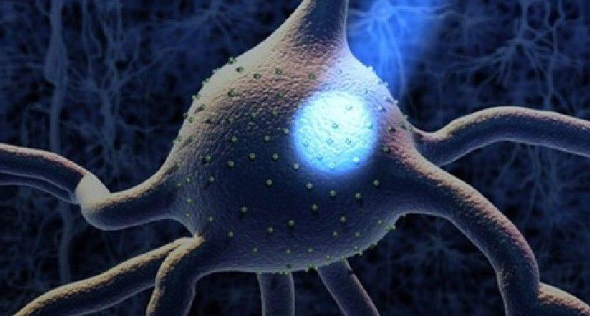 Qué es la Optogenética